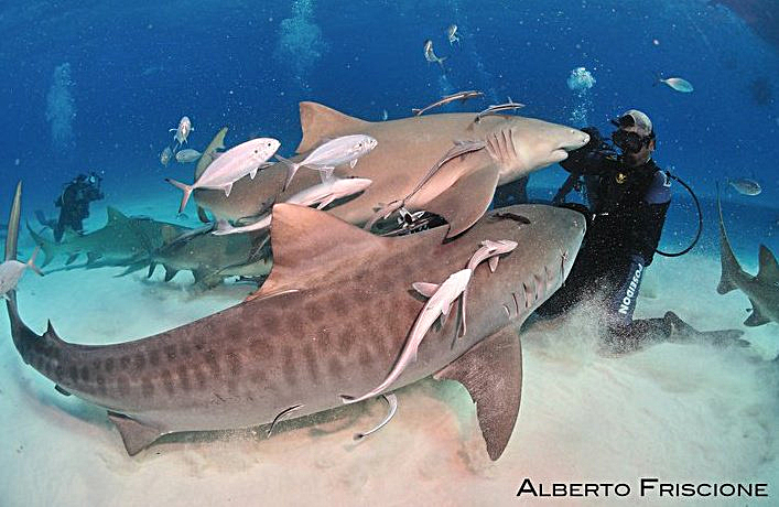 Blue Oblivion – And Where Are theSharks?